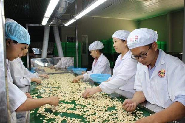 Le Vietnam aide le Cambodge a augmenter sa production de noix de cajou hinh anh 1