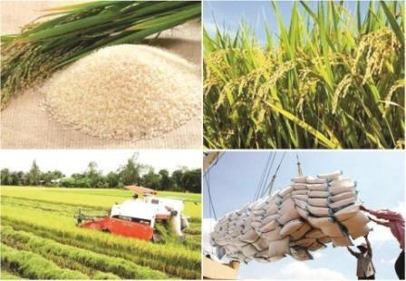 2017: une bonne annee pour les exportations nationales de riz hinh anh 1