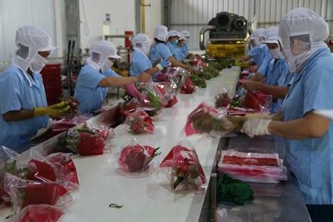 L'agriculture vietnamienne s'efforce de s'adapter au marche et aux changements climatiques hinh anh 2