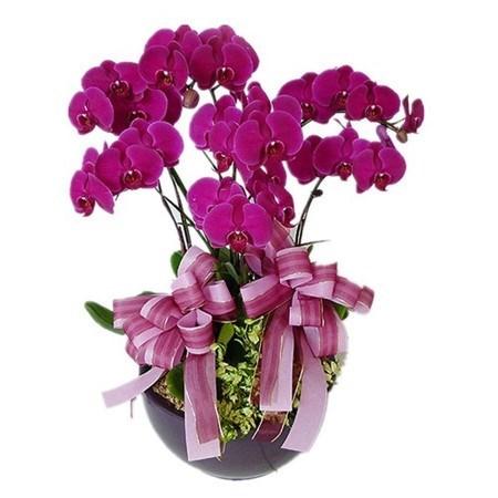 Quelles plantes allez-vous choisir pour le Tet hinh anh 5