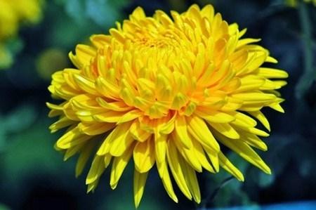 Quelles plantes allez-vous choisir pour le Tet hinh anh 1