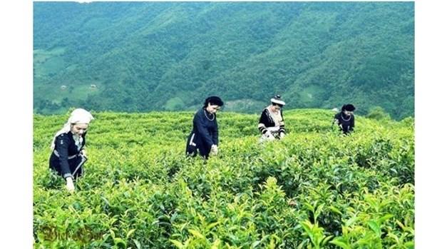 Le groupe sud-coreen Agerigna cherche a collaborer avec Cao Bang dans l'agriculture hinh anh 1