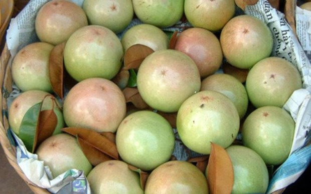 Une decennie d'efforts pour exporter des pommes etoilees vers les Etats-Unis hinh anh 1