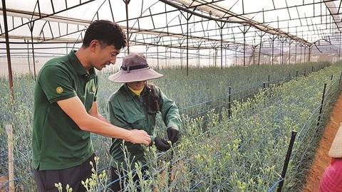 Un ingenieur japonais fascine par les fleurs de Da Lat hinh anh 3