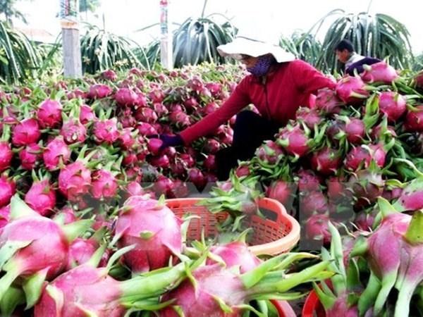 Efforts pour ameliorer la qualite des fruits vietnamiens hinh anh 1