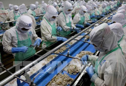 Un bon debut pour les exportations des produits aquatiques hinh anh 1