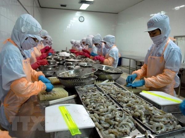 Une delegation australienne verifie la chaine de production de crevettes du Vietnam hinh anh 1