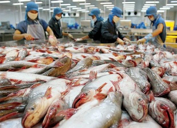 Le Vietnam propose a l'OMC sur les restrictions americaines des importations de pangasius hinh anh 1