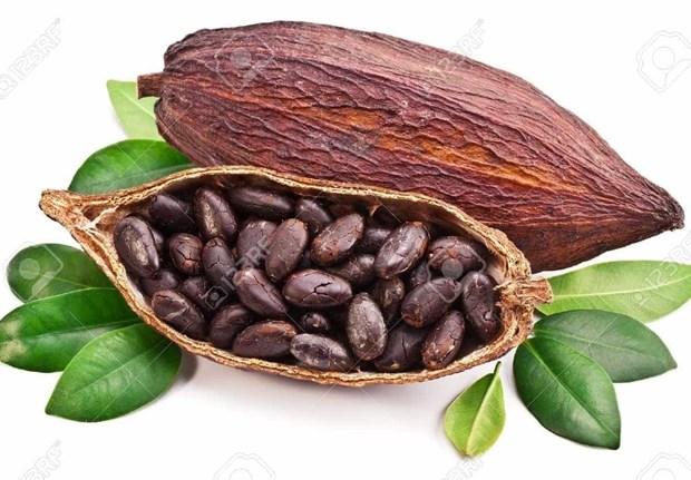 Le cacao vietnamien classe