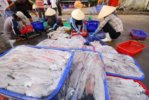 Le Vietnam, 2eme exportateur de cephalopodes au Japon hinh anh 1
