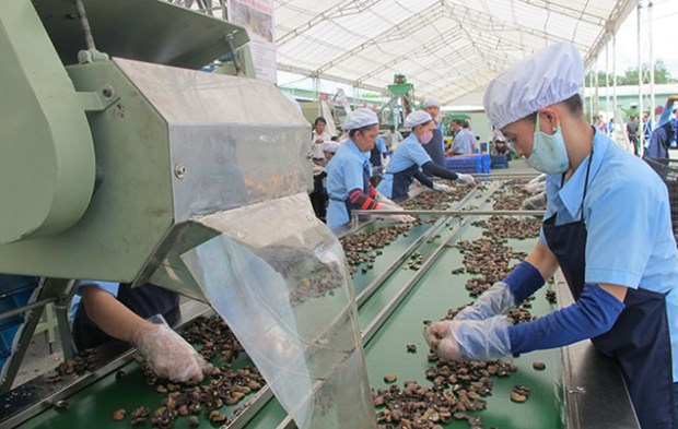 Necessite d'elever la valeur ajoutee de la noix de cajou du Vietnam hinh anh 1