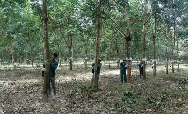 Le Cambodge salue les contributions des compagnies de caoutchouc a Kampong Thom hinh anh 1