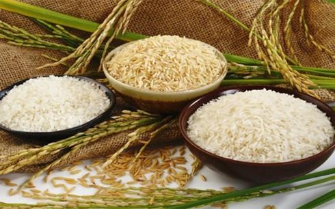 Janvier/fevrier: la Chine, premier marche a l'export du riz vietnamien hinh anh 1