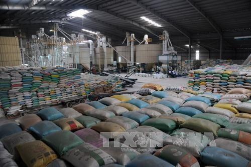 Le gouvernement sud-coreen fait don de 10.000 tonnes de riz au Vietnam hinh anh 1