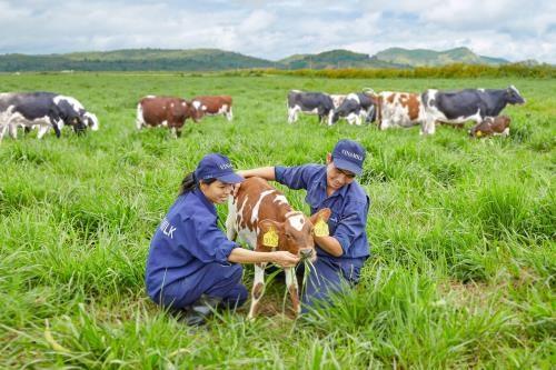 Vinamilk construira quatre fermes laitieres de haute technologie a Thanh Hoa hinh anh 1