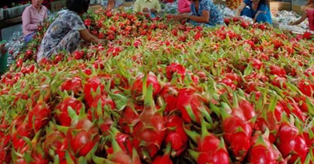 La part de marche des fruits et legumes vietnamiens en Europe ne s'eleve qu'a 0,9% hinh anh 1