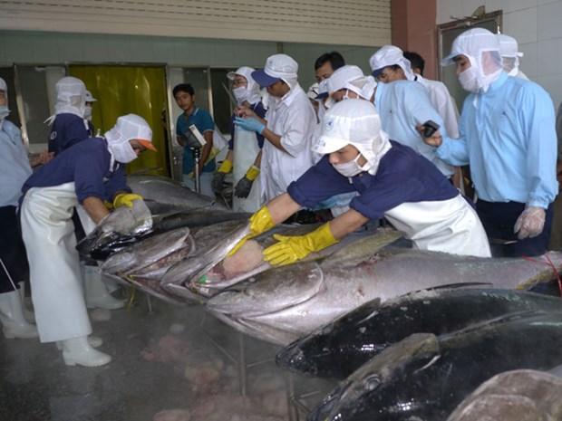 Bond des exportations nationales de thon au Chili hinh anh 1