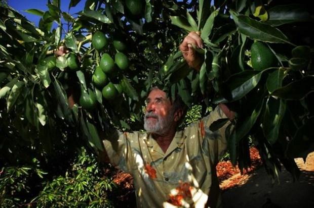 Vietnam - Mexique : opportunites de cooperation dans l'agriculture hinh anh 1