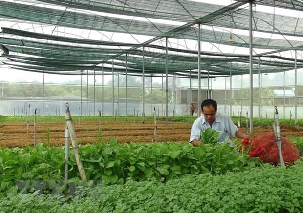 Les exportations nationales de fruits et legumes ont le vent en poupe hinh anh 1