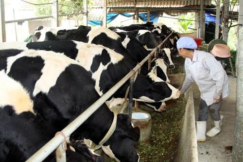 Hausse continue des importations d'aliments pour animaux et matieres premieres hinh anh 1