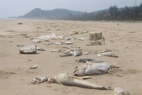 Centre: des provinces s'efforcent de regler l'incident environnemental pour se developper hinh anh 2