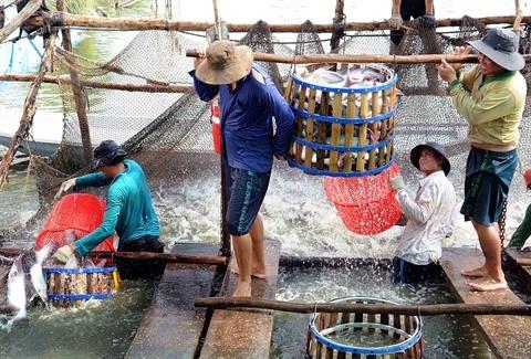 Le chef-lieu frontalier de Kien Tuong fait peau neuve hinh anh 3
