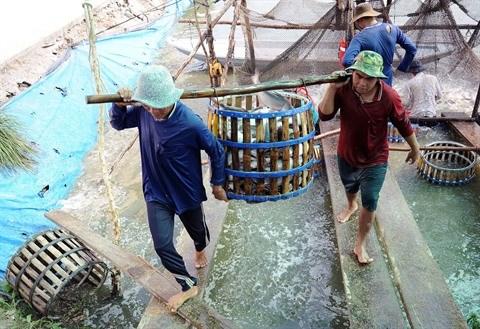 Des conditions favorables pour developper l'elevage aquatique a Kien Tuong hinh anh 1