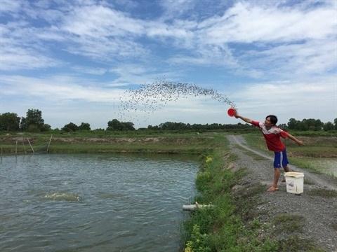 Des conditions favorables pour developper l'elevage aquatique a Kien Tuong hinh anh 3