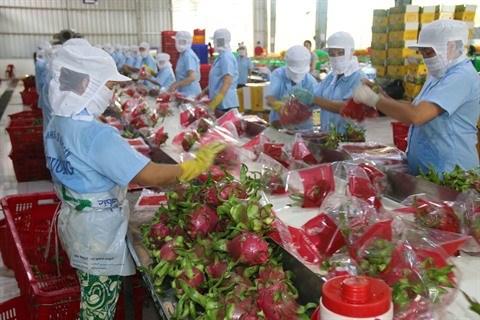 Exportations de fruits et legumes du Vietnam en croissance impressionnante hinh anh 1