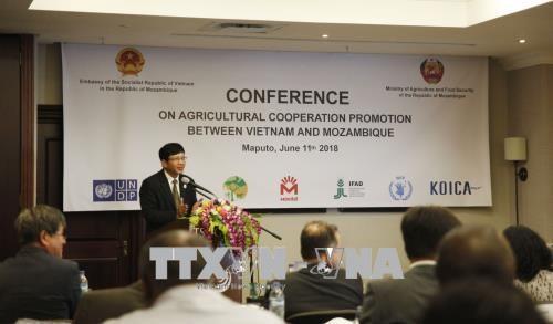 Le Mozambique apprecie l'efficacite de sa cooperation avec le Vietnam dans l'agriculture hinh anh 1