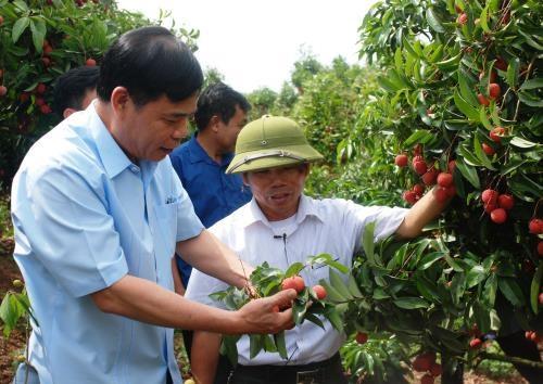 Bac Giang : renforcer les mesures pour la consommation de litchi hinh anh 1
