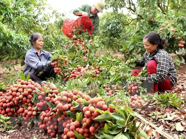 Fruits et legumes : hausse de 20% du chiffre d'affaires a l'export au premier semestre hinh anh 1