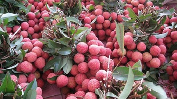 Accelerer l'exportation des fruits vietnamiens vers le marche chinois hinh anh 1