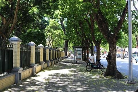 La saison des fruits de pancovier a Hanoi hinh anh 1