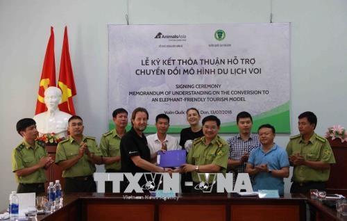 La province de Dak Lak applique un modele touristique respectueux pour les elephants hinh anh 1
