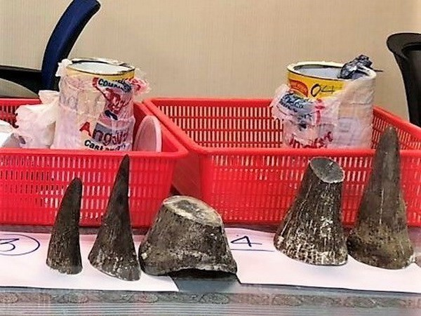 Saisie de cornes de rhinoceros a l'aeroport de Tan Son Nhat hinh anh 1