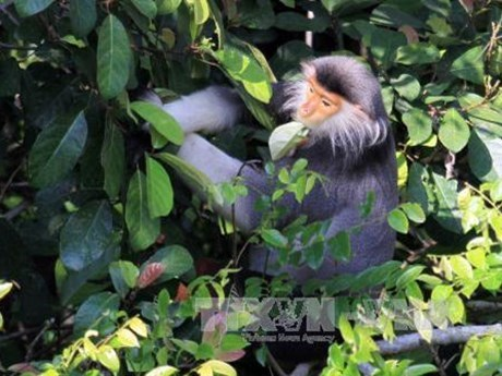 Projet de preservation des primates rares a Thanh Hoa hinh anh 1