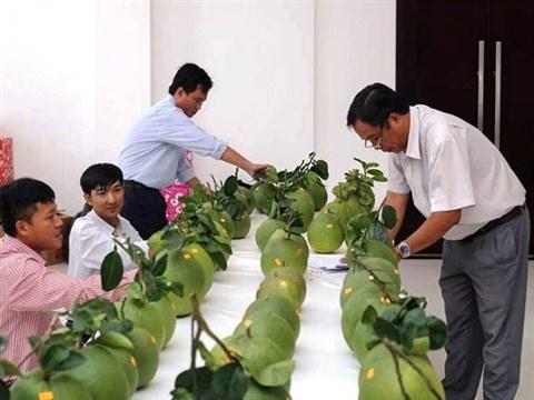 Des concours qui creent une saine emulation entre les paysans hinh anh 1