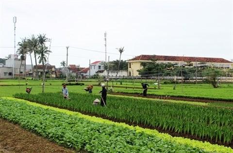 Quand maraichage rime avec tourisme a Da Nang hinh anh 1