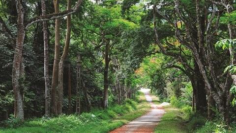La capitale Hanoi a un plan pour la biodiversite hinh anh 1