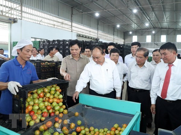 Le PM visite un modele de production agricole de haute technologie a Lam Dong hinh anh 1