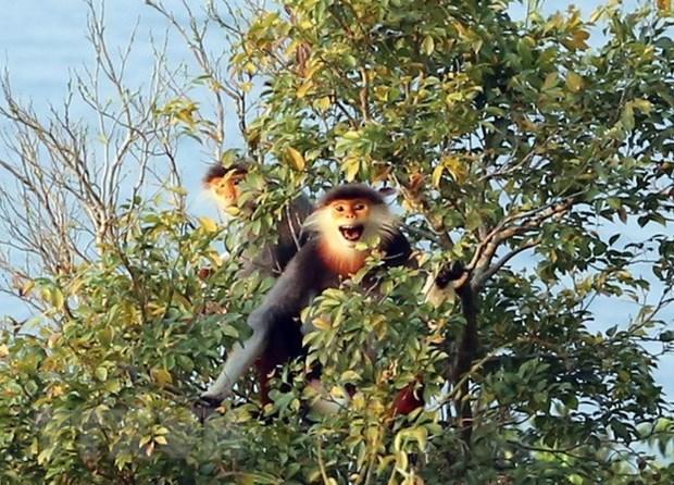 Plan d'action d'urgence pour proteger les primates de Thua Thien-Hue hinh anh 1