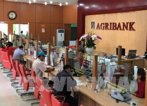 Agribank accorde des credits a taux preferentiels a l'agriculture high-tech hinh anh 1