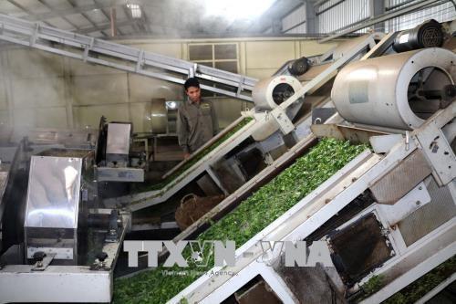 Les exportations de the en berne hinh anh 1