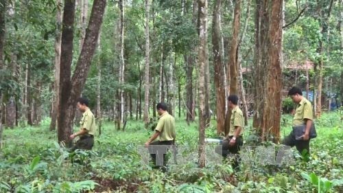 Tay Nguyen : reboisement plus de 12.500 ha de foret pendant la saison des pluies hinh anh 1