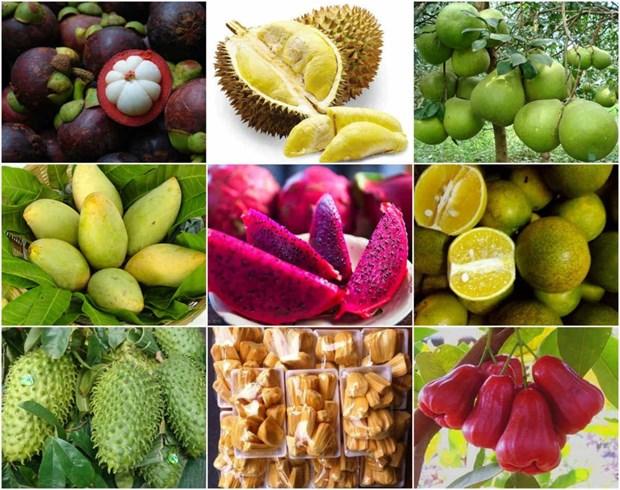 Le Moyen-Orient, un marche potentiel pour les produits agricoles vietnamiens hinh anh 1