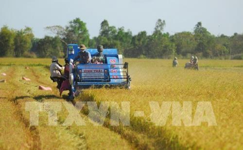 Surmonter des barrieres techniques pour exporter des produits agricoles vers l'Europe hinh anh 1