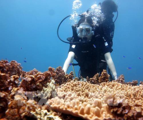 Une voute sous-marine attire des touristes a Quang Ngai hinh anh 1