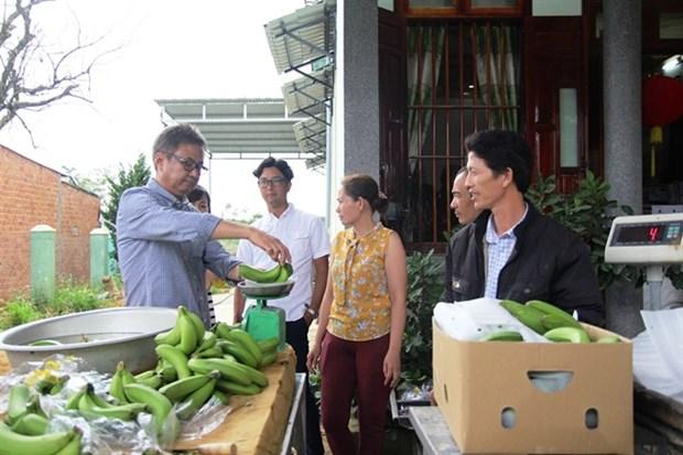 Lam Dong exporte des bananes Laba vers le Japon hinh anh 1
