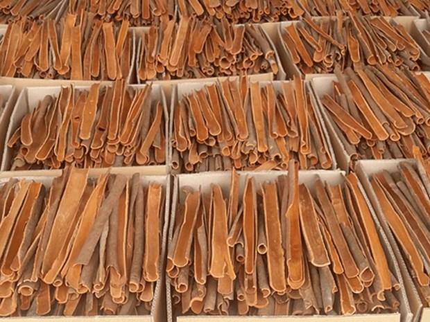 Vers un developpement durable des filieres de la cannelle et de l'anis etoile hinh anh 2